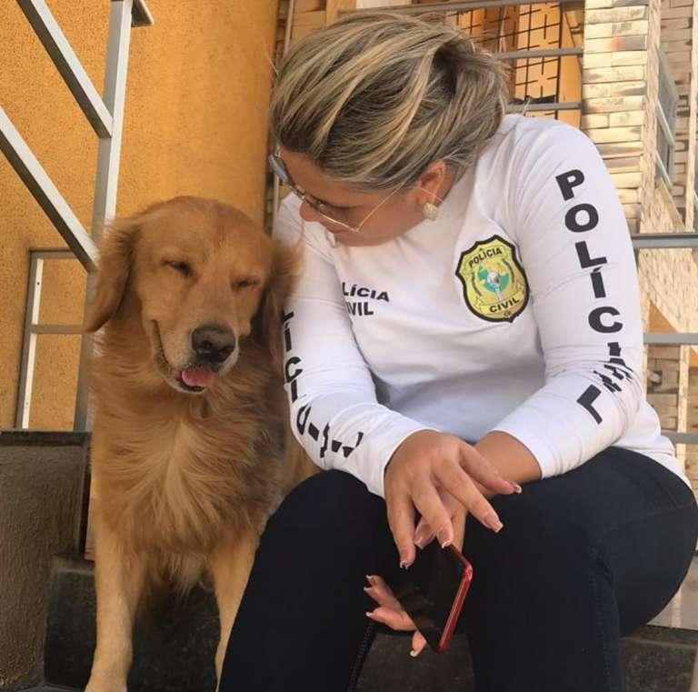 Denúncias de maus-tratos de animais no Ceará podem ser feitas sem sair de casa